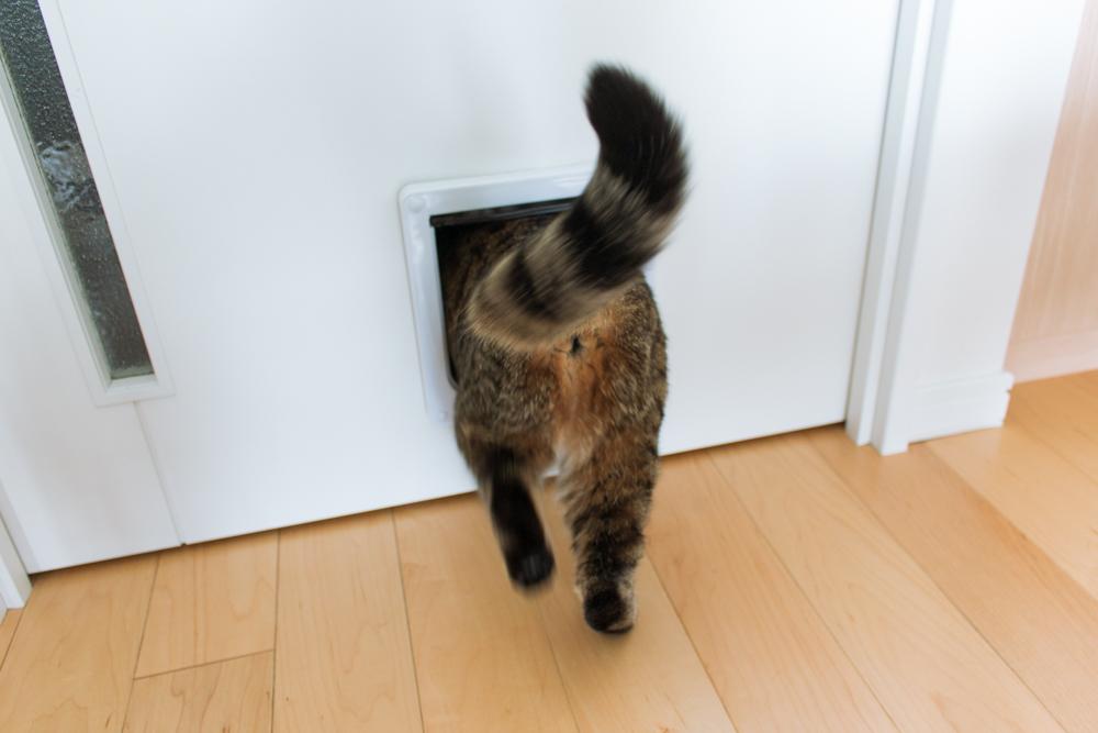 猫ドアに入るぽぽ