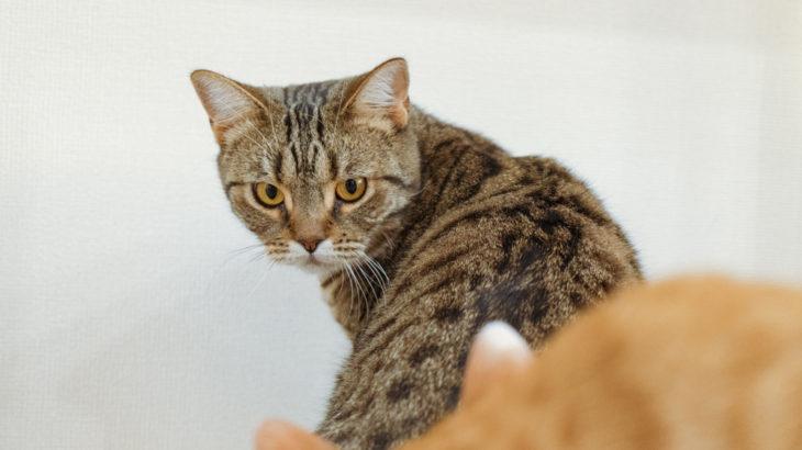 保護猫ぽぽと私たち夫婦の出会い