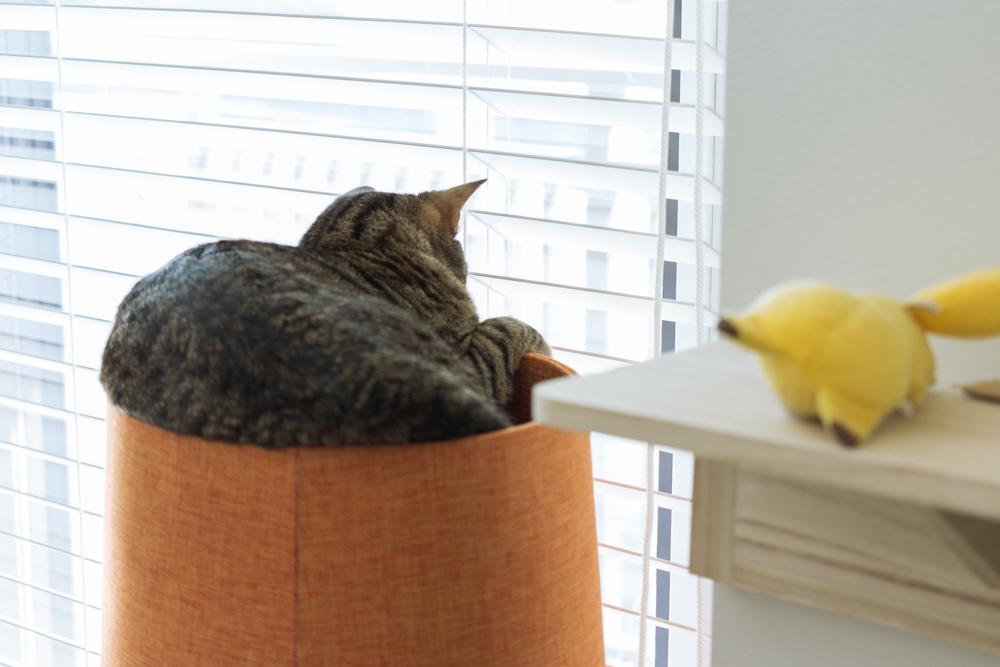 猫タワーの上から外を眺めるぽぽ