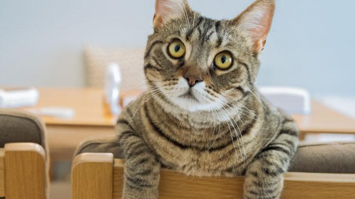 保護猫ぽぽと飼い主(当サイト運営者)について