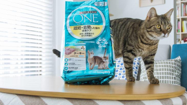 里親からお世話になった保護猫施設へ。フードの購入でできる活動支援