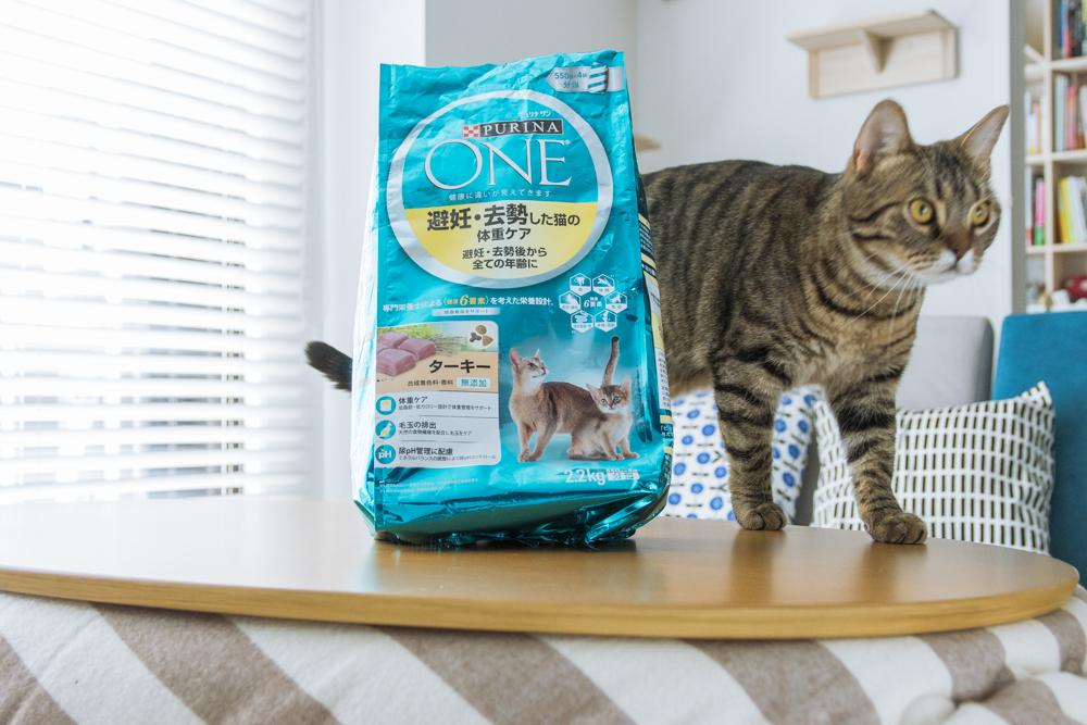 ピュリナ ワン 避妊・去勢した猫の体重ケア ターキー