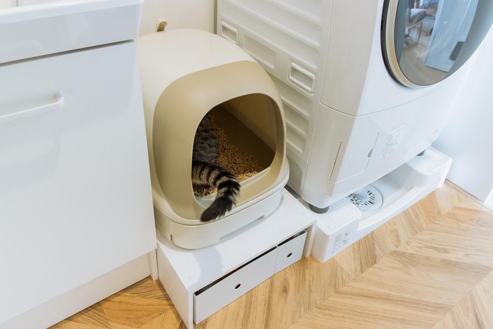 早速猫トイレを使うぽぽ