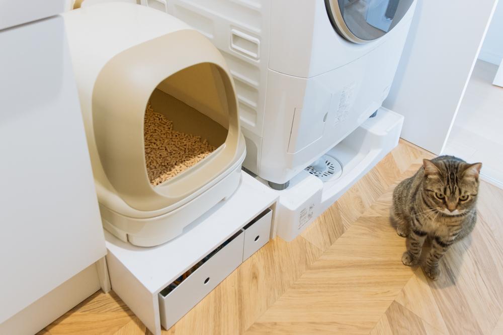 猫トイレにOKを出すぽぽ