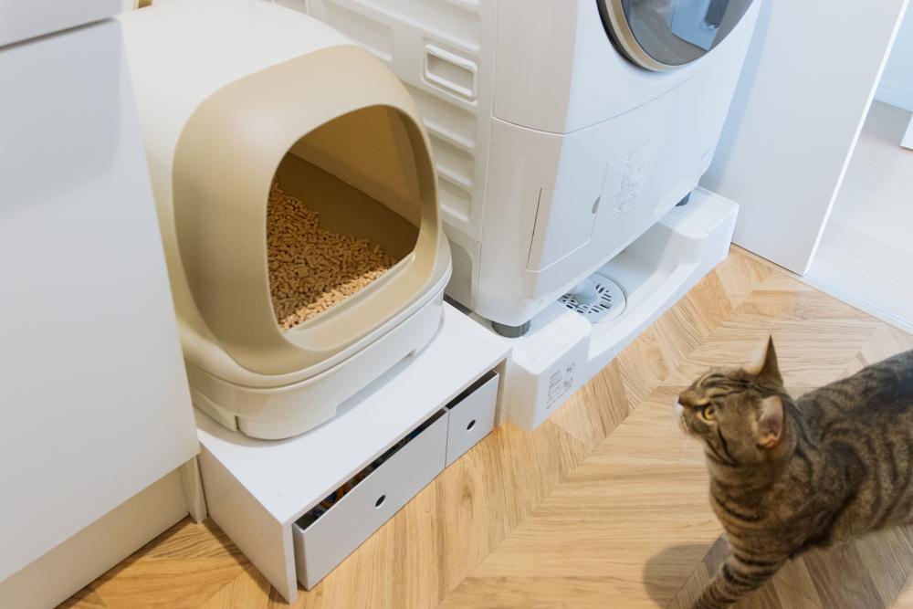 猫トイレをチェックするぽぽ