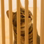 【保護猫迎え入れ】譲渡前に準備したもの(脱走・侵入防止編)