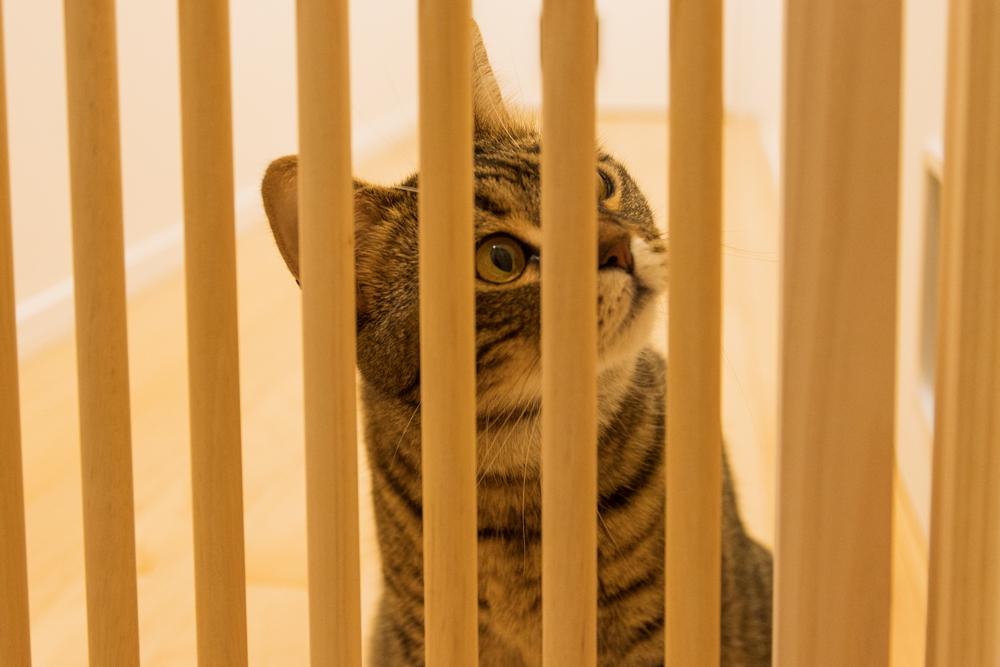 脱走を計画する猫
