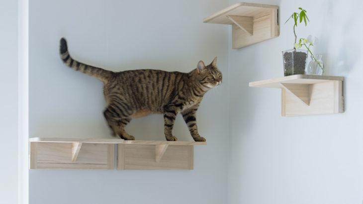 【無料配布】Zoomで使える保護猫ぽぽのバーチャル背景画像