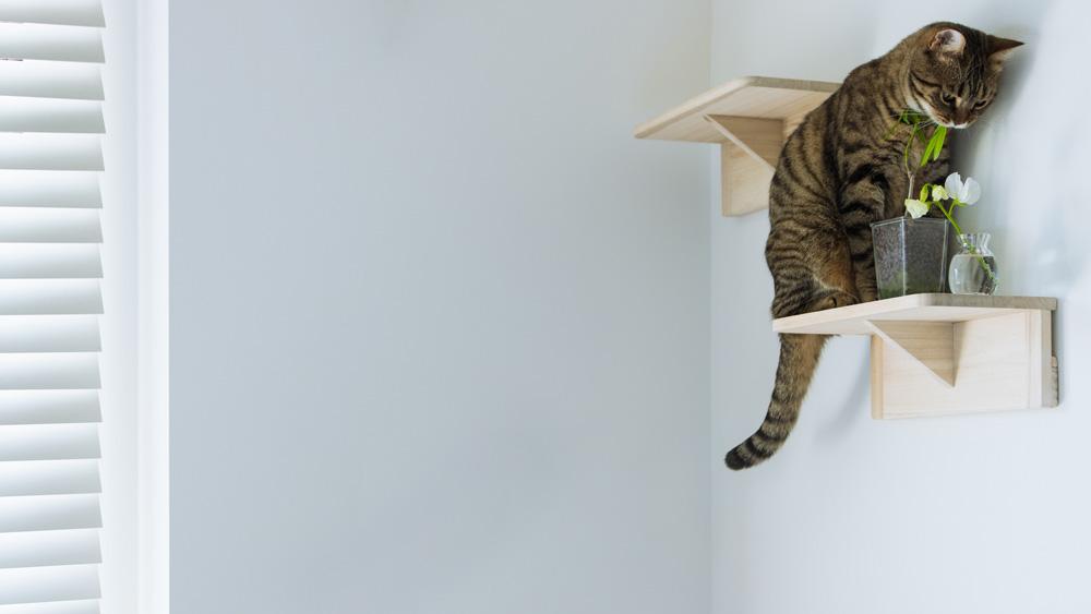 リビングのキャットステップで観葉植物を食べる猫のバーチャル背景