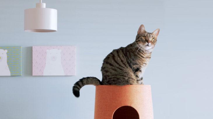 【無料配布】Zoomバーチャル背景動画で保護猫ぽぽが動き回るよ