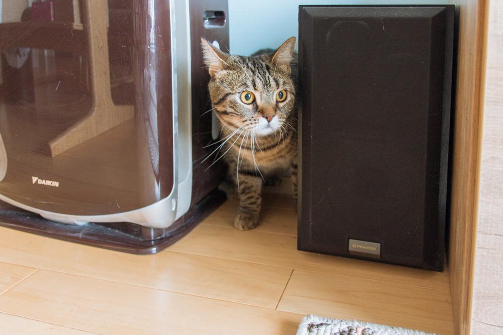 どこか別の隠れ場所を必死に探す猫