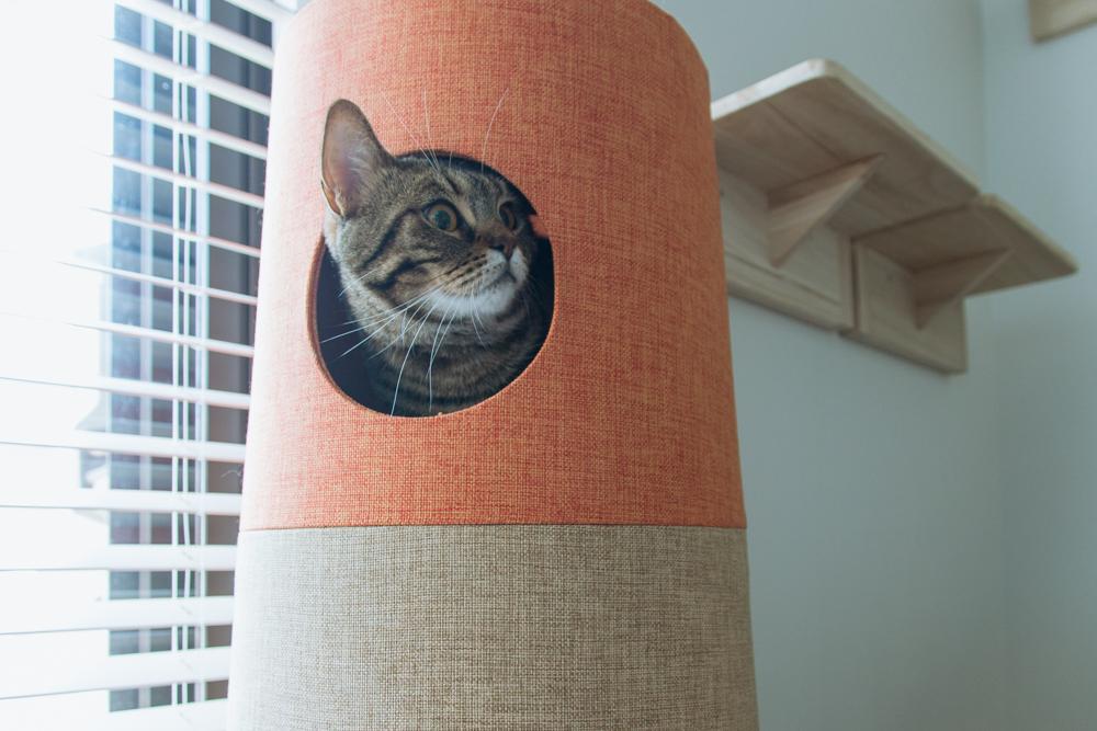敵が去ったことを慎重に確認する猫