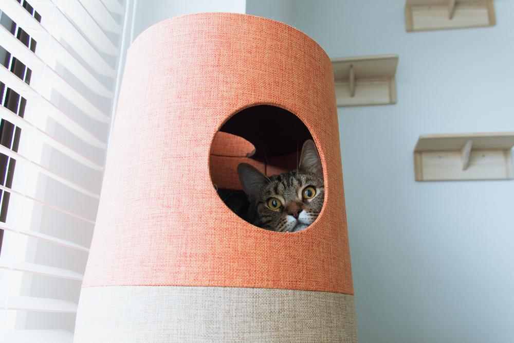 キャットタワーの中に逃げ込んだ猫