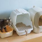 【猫砂の粉塵対策】園芸用ざるや茶こしを使わない手軽な方法