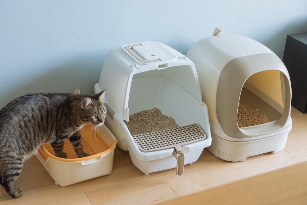 トイレを選ぶ猫