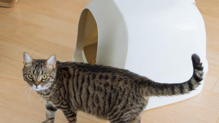 【保護猫迎え入れ】譲渡前に準備したもの(トイレ・猫砂編)
