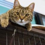 環境変化でストレス?保護猫のトライアル中に血便で動物病院を受診した話