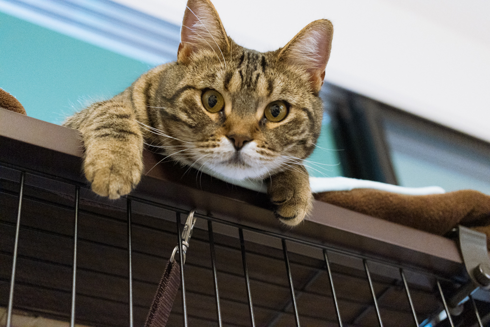 人間の体調を見守る猫