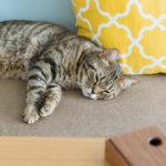ふるさと納税で保護猫・地域猫活動支援!寄附先の自治体を探す方法