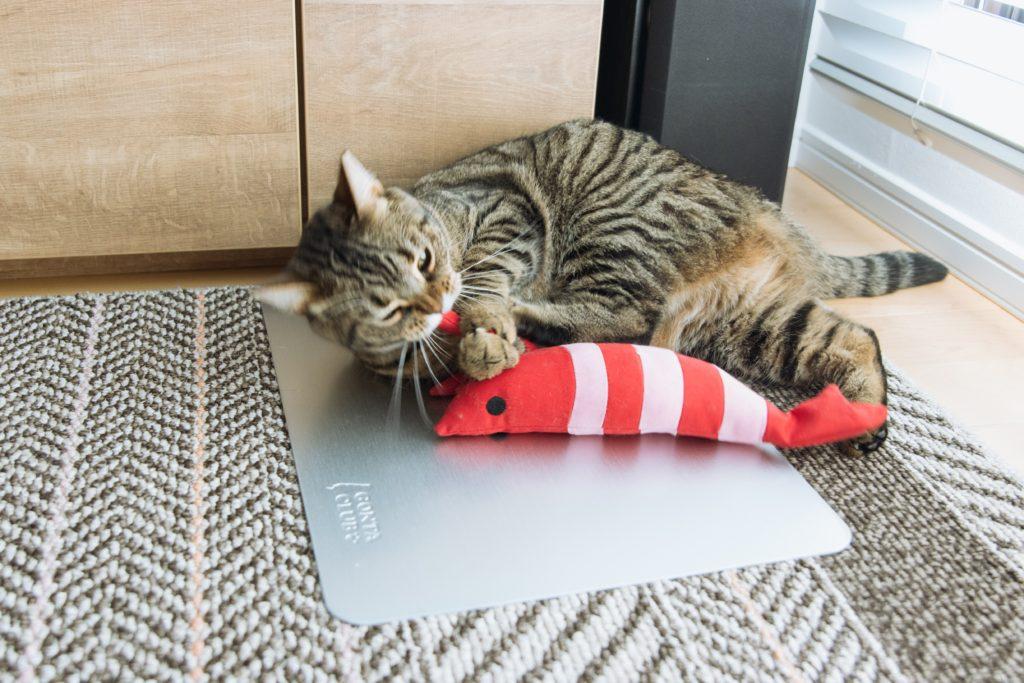 エビ(けりぐるみ)に高速キックを連発する猫