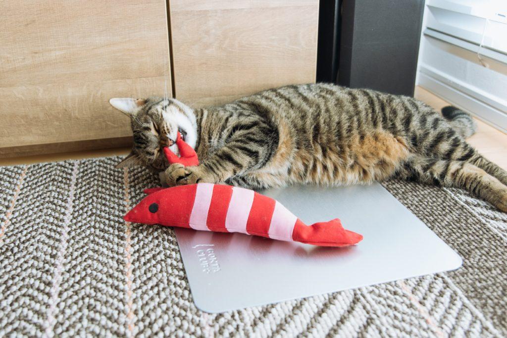 エビ(けりぐるみ)のハサミを噛む猫