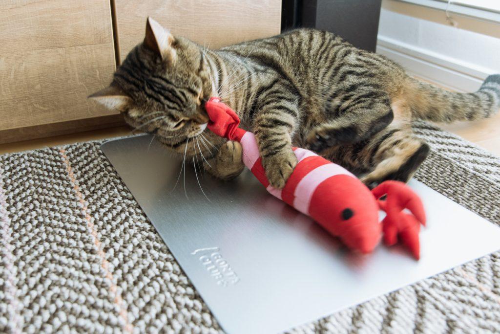 猫にしっぽを噛まれる哀れなエビ(けりぐるみ)