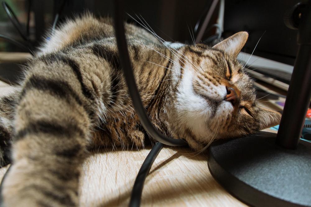 パソコンの隙間で寝るぽぽ