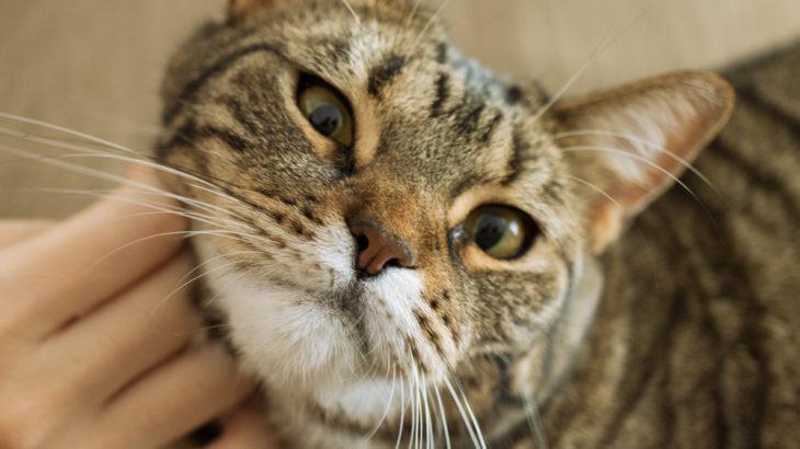 猫は人を愛する天才なんじゃないか