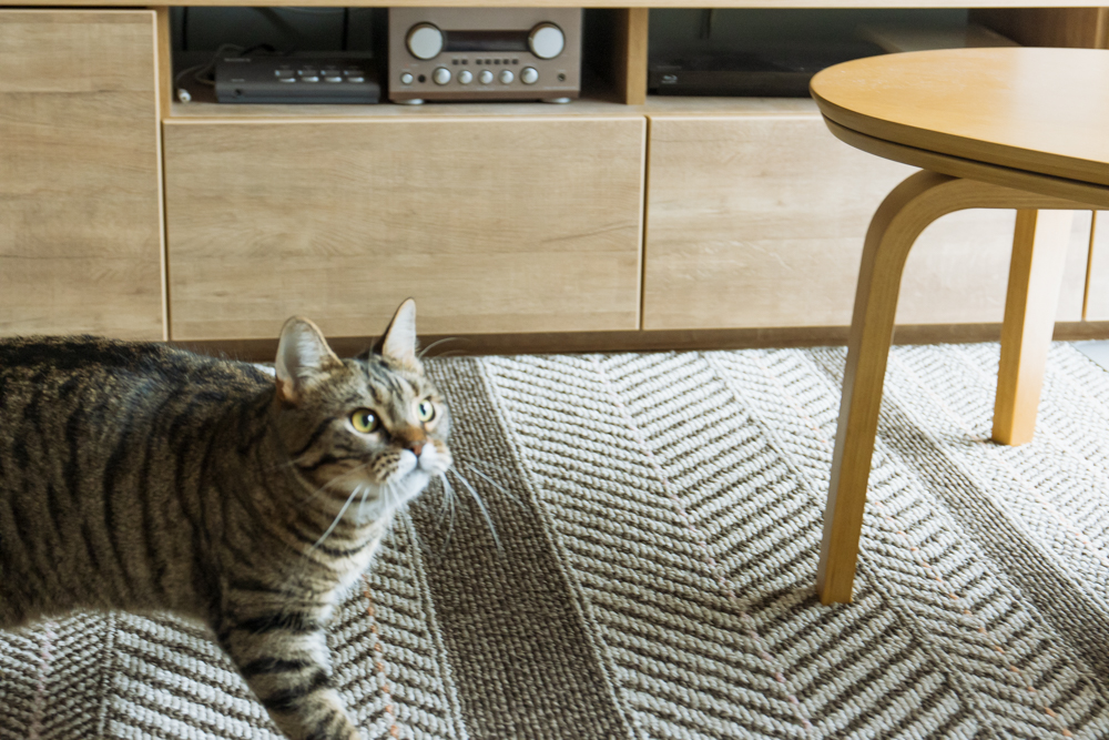 カシャブンを早く出せと圧をかける猫