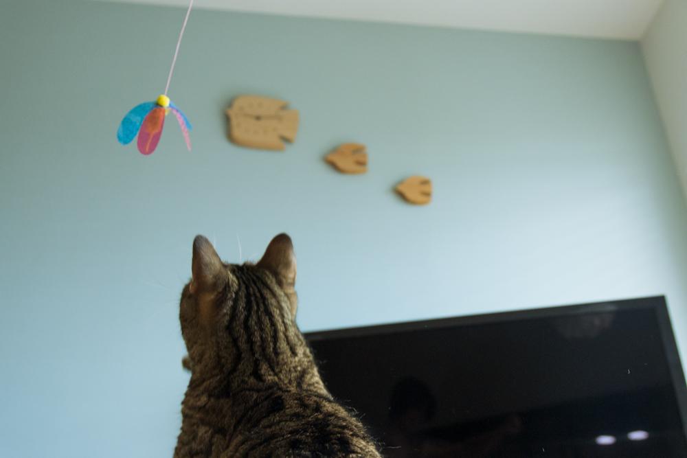 カシャブンを追いかける猫