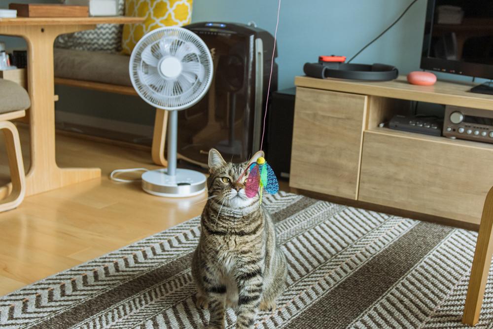 精神統一をはかる猫