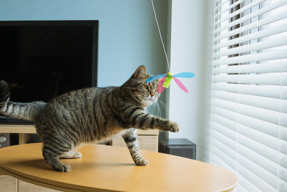 ハチさんに攻撃する猫