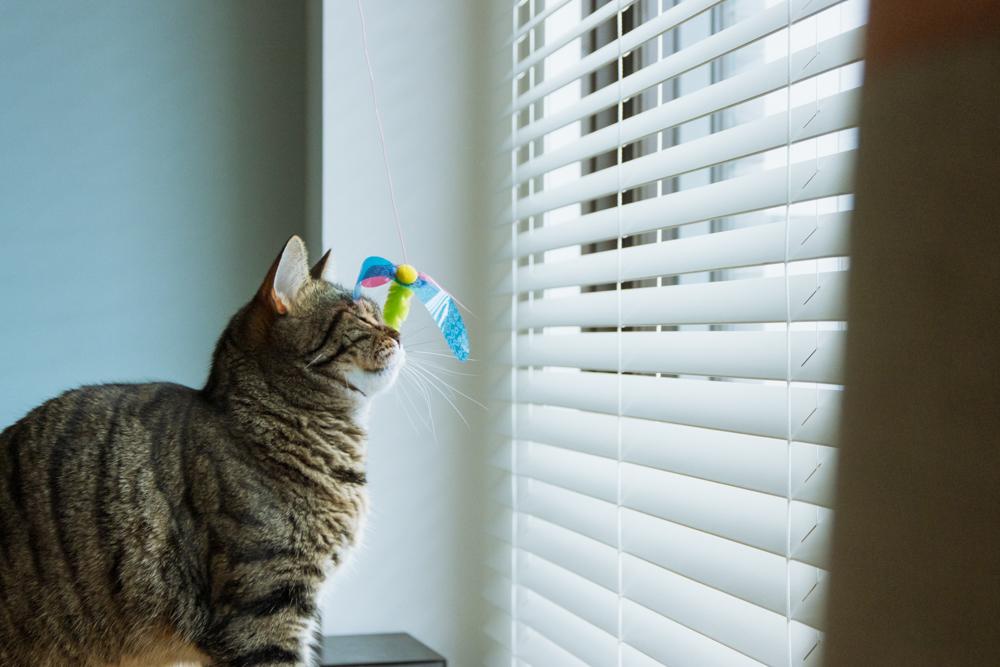 ハチさんから手痛い反撃を受ける猫