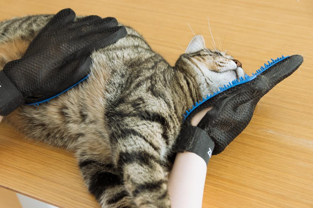 やわらかい突起がついていて手で撫でるようにブラッシングができます