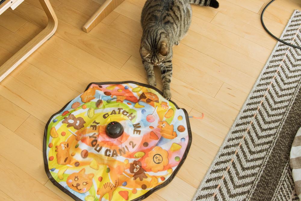 キャッチ・ミー・イフ・ユー・キャン2で遊ぶ猫
