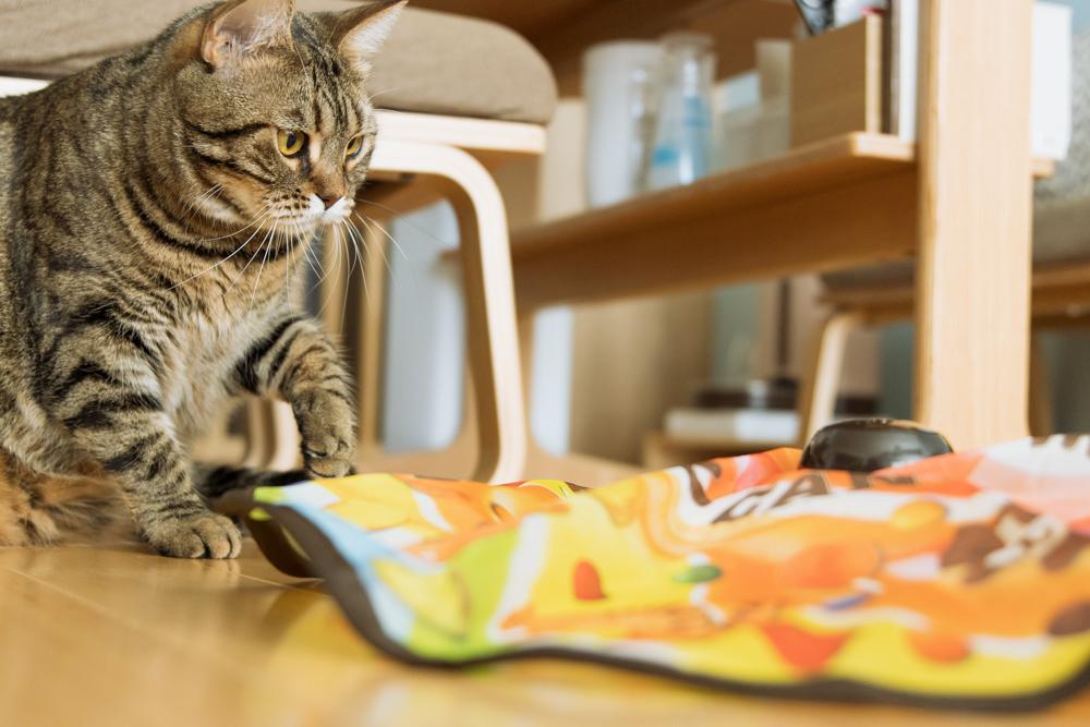 キャッチ・ミー・イフ・ユー・キャン2のスピードに追い付けない猫