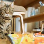 猫がひとり遊びできるおもちゃ3選
