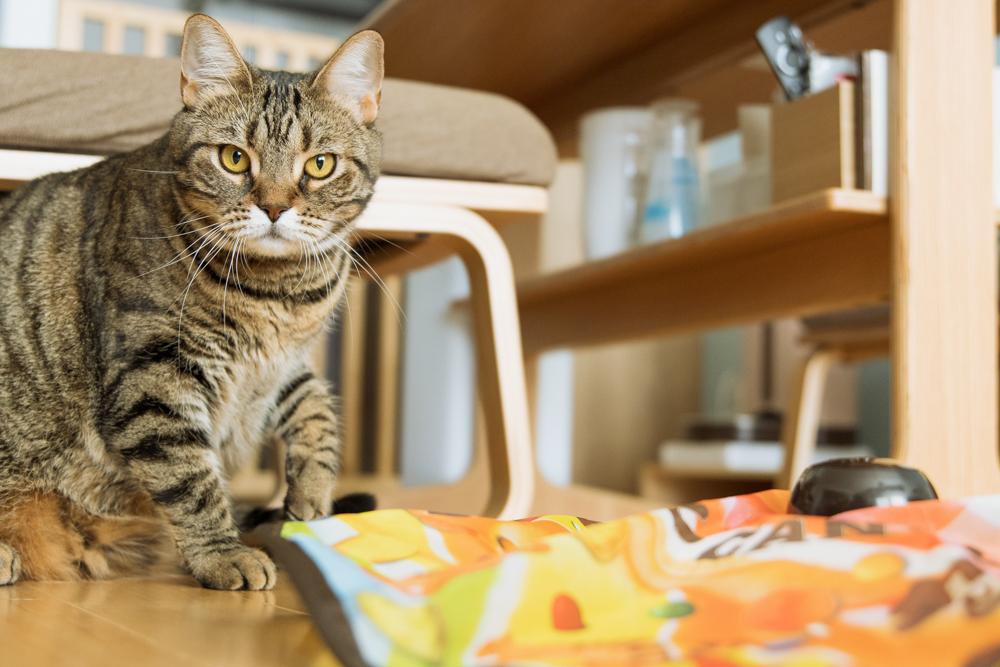 キャッチ・ミー・イフ・ユー・キャン2のスピードに文句を言う猫