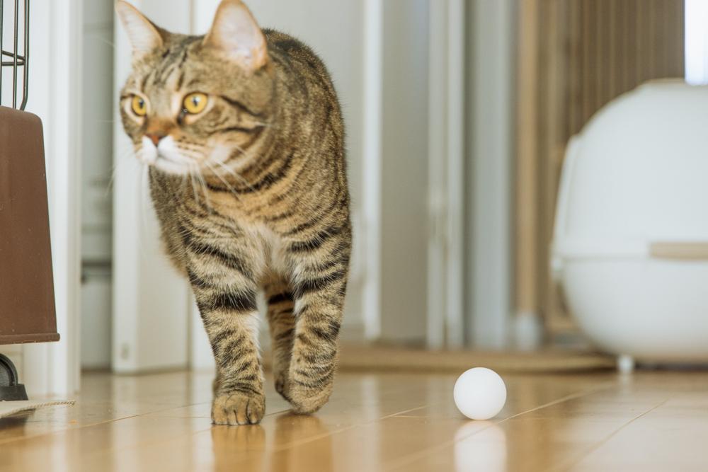 遊び終わった猫