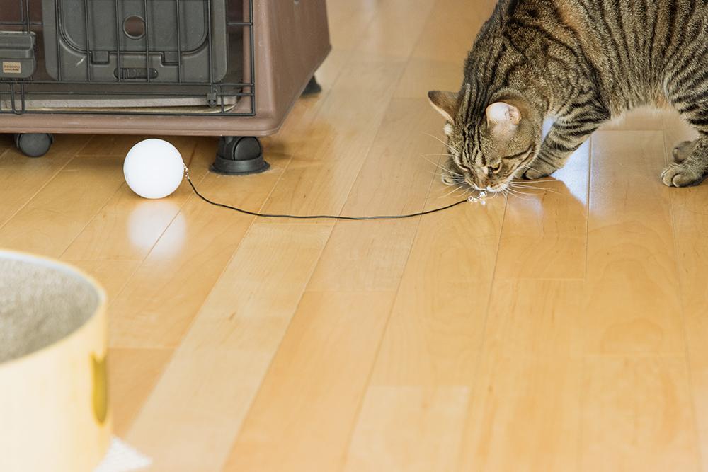 自動式ボールおもちゃHome Run Smart Ballの鈴に食いつく猫