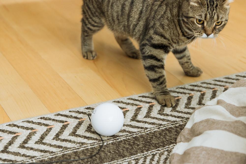おもちゃが無害なので安心した猫