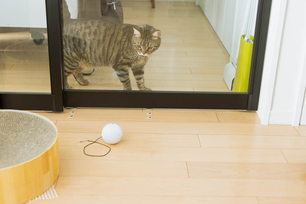 自動式ボールおもちゃHome Run Smart Ballの動向を見守る猫