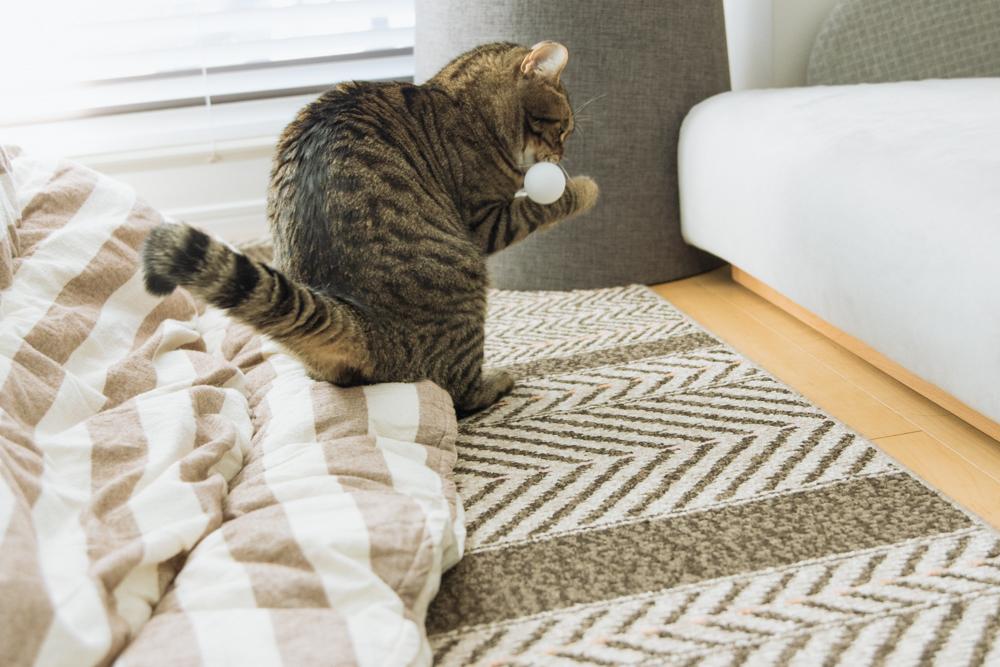 ピンポン玉を器用につかむ猫