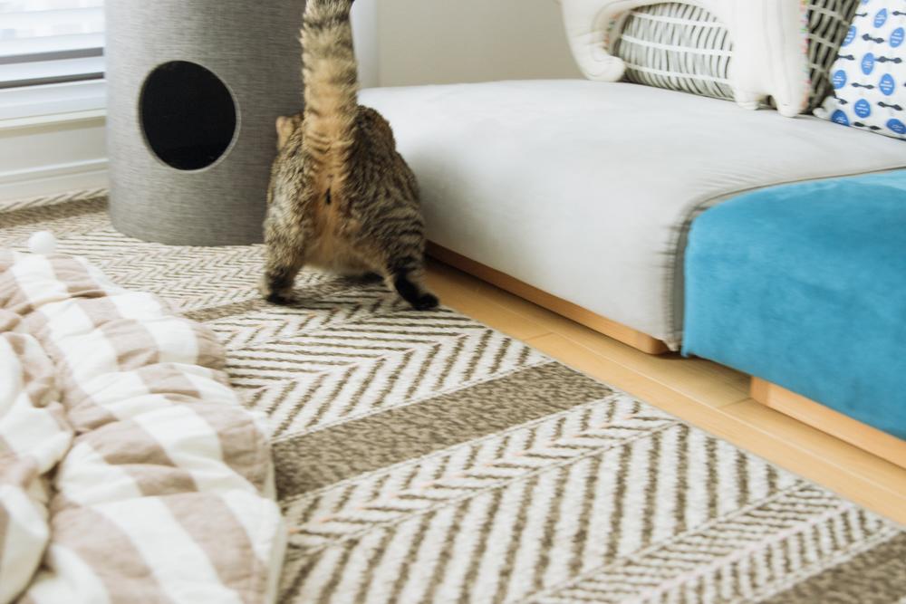 ピンポン玉を追いかける猫