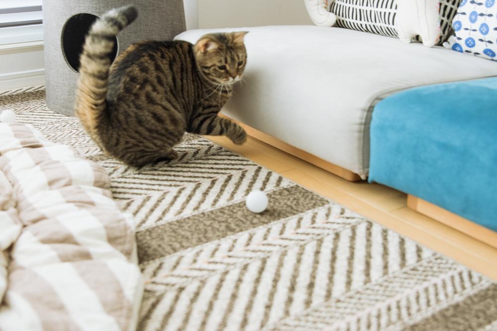 逃げたピンポン玉を追いかける猫