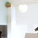 【無料配布】Zoomで使える保護猫ぽぽのバーチャル背景画像・動画2021年版