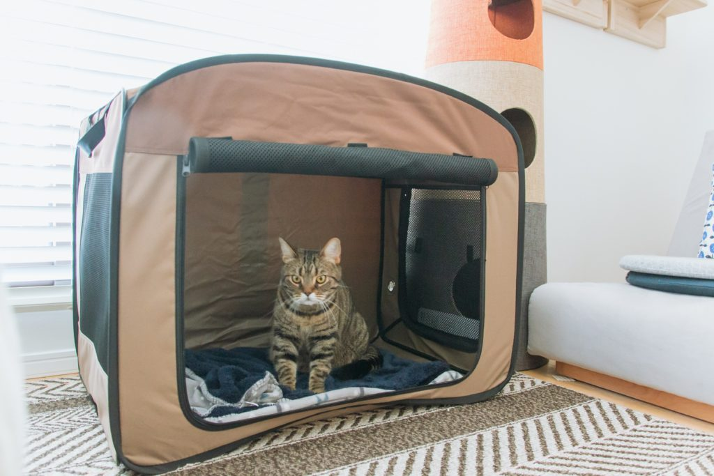 ソフトケージに入る猫