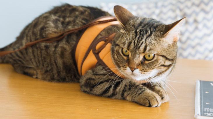 非常時に備えて 猫ちゃんの同行避難に必要な防災グッズ